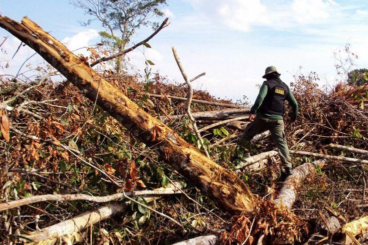 Para especialistas, causas da seca vão além do desmatamento na Amazônia