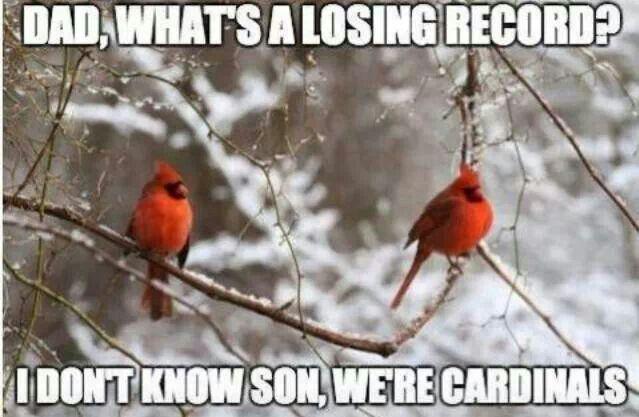 STL Cardinals! Even the birds know! #STL #CARDINALS #BASEBALL