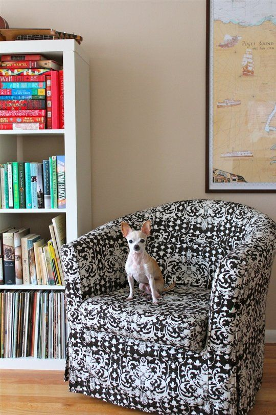 Tips for Living in a Small Space with Pets