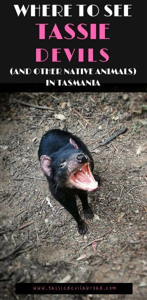 Where to see Tassie Devils (and other native animals) in Tasmania!
