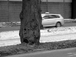 Black and white photography: Haikeat jäähyväiset Mechelininkadun lehmuksille. Heitä ei enää ole. Nyyh.