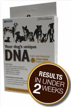 Dog Genetic Testing Kit Reviews