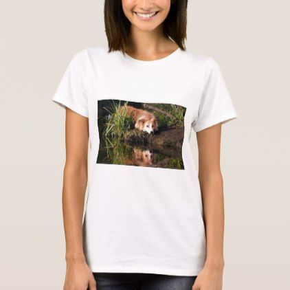 #Collie Mix Water Reflections T-Shirt - #cute #gifts #cool #giftideas #custom