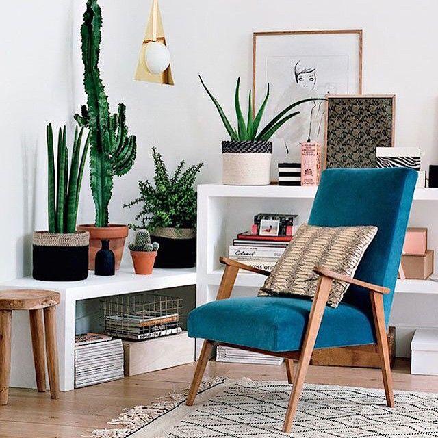 #分享Instagram# #indoorplant #interiorlove
