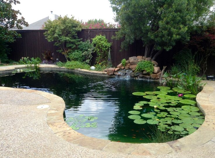 19 best convert pool to pond images on pinterest ponds - Swimming pool to fish pond conversion ...