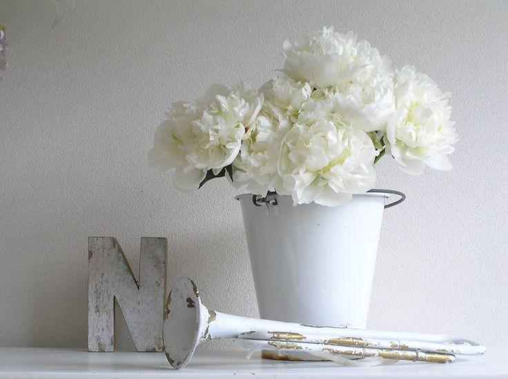 pioenrozen | Pastels and Whites: Witte pioenrozen / White peonies