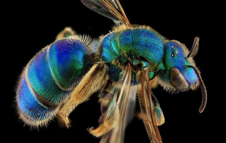 Macro Photos of Bees by the United States Geological Survey - My Modern Met