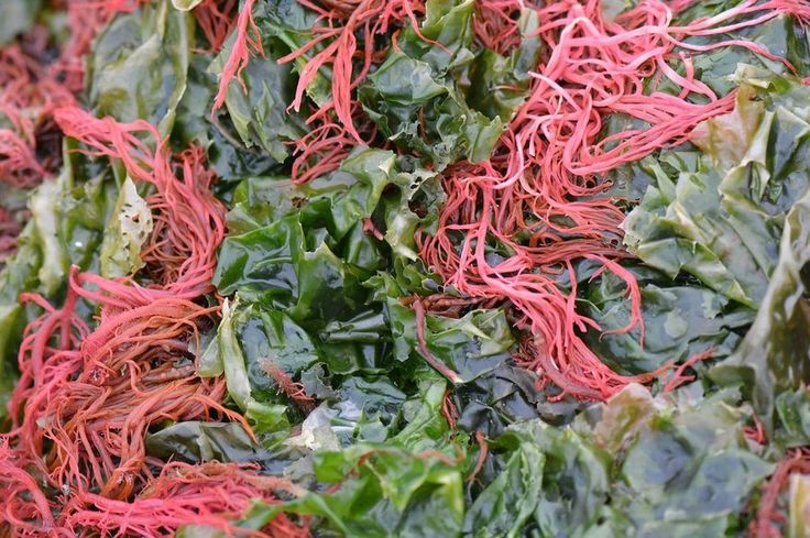 Tipos de algas comestibles, propiedades increíbles y usos