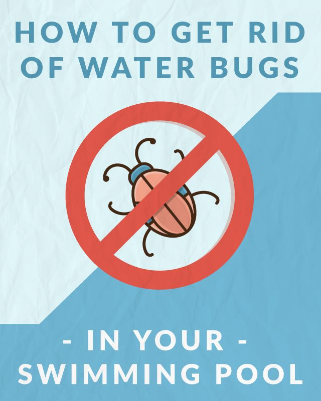 How to get rid of water bugs in your swimming pool pools swimming pools and how to get rid for How to swim in a pool on your period