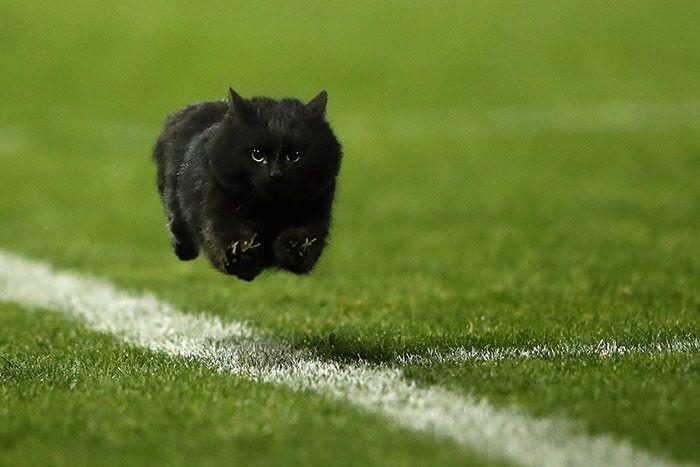 ラグビーの試合に乱入した猫