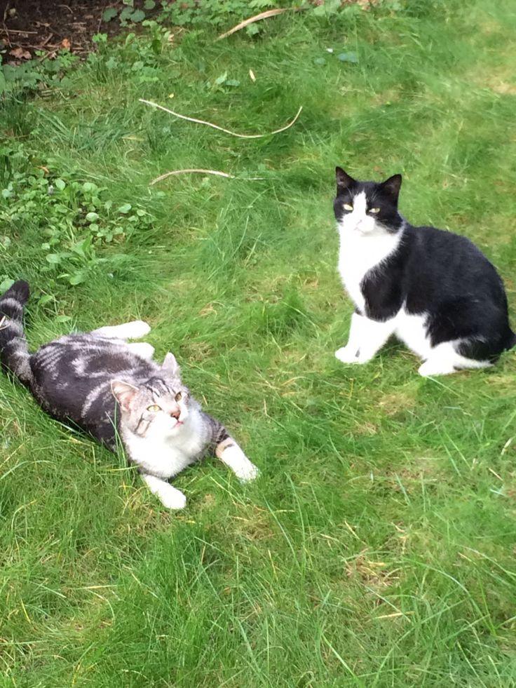 Figaro's nieuwe vriend