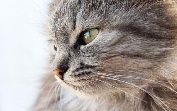 تحميل 100 صورة خلفيات قطط رائعة وعالية الدقة مداد الجليد Funny Cat Photos Cute Cat Wallpaper Cats