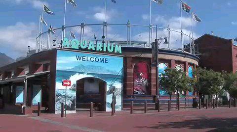 cape_town_aquarium