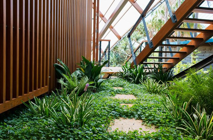 Dicondra creating a green carpet to a stunning residential property in Byron Bay, NSW