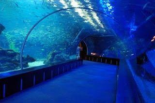 Sea Life Busan Aquarium merupakan akuarium yang terletak di Pantai Haeundae, Korea Selatan. Ada sekitar 35.000 hewan laut dari 250 spesies di dalam tempat wisata populer ini. Hewan laut dapat dilihat melalui terowongan kaca arklik sepanjang 80 meter.