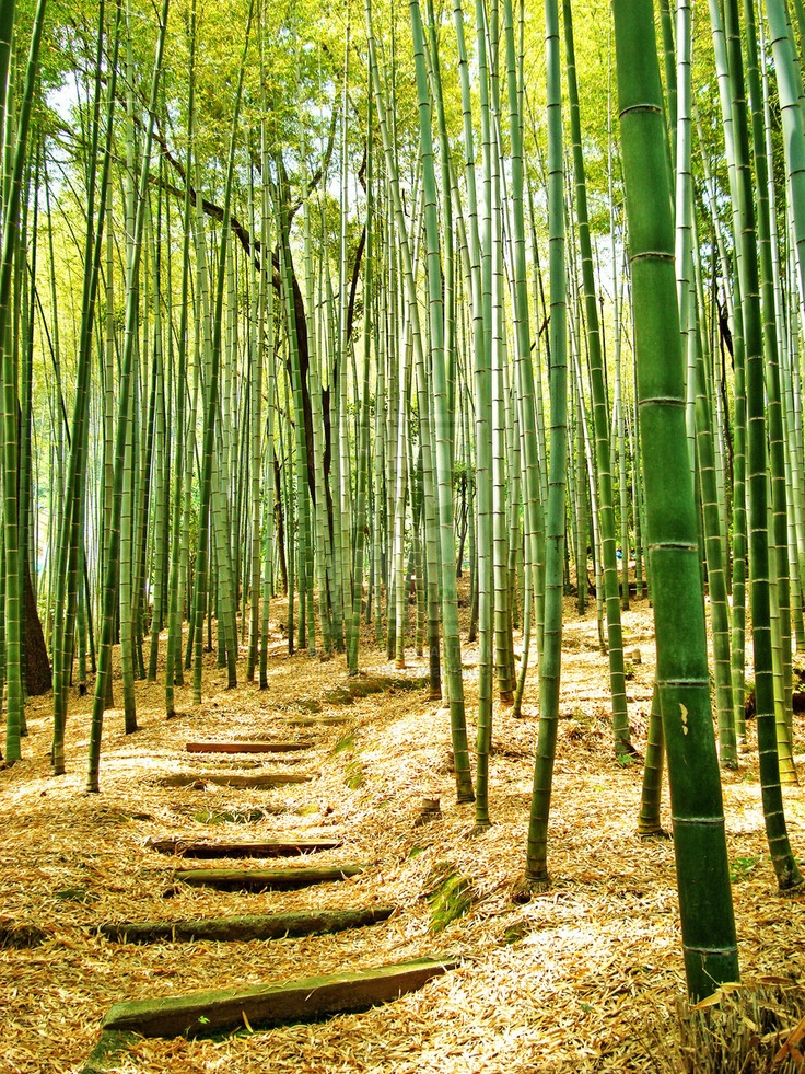 bamboo is usually found in such gardens and plum trees are often grown there  combinations of