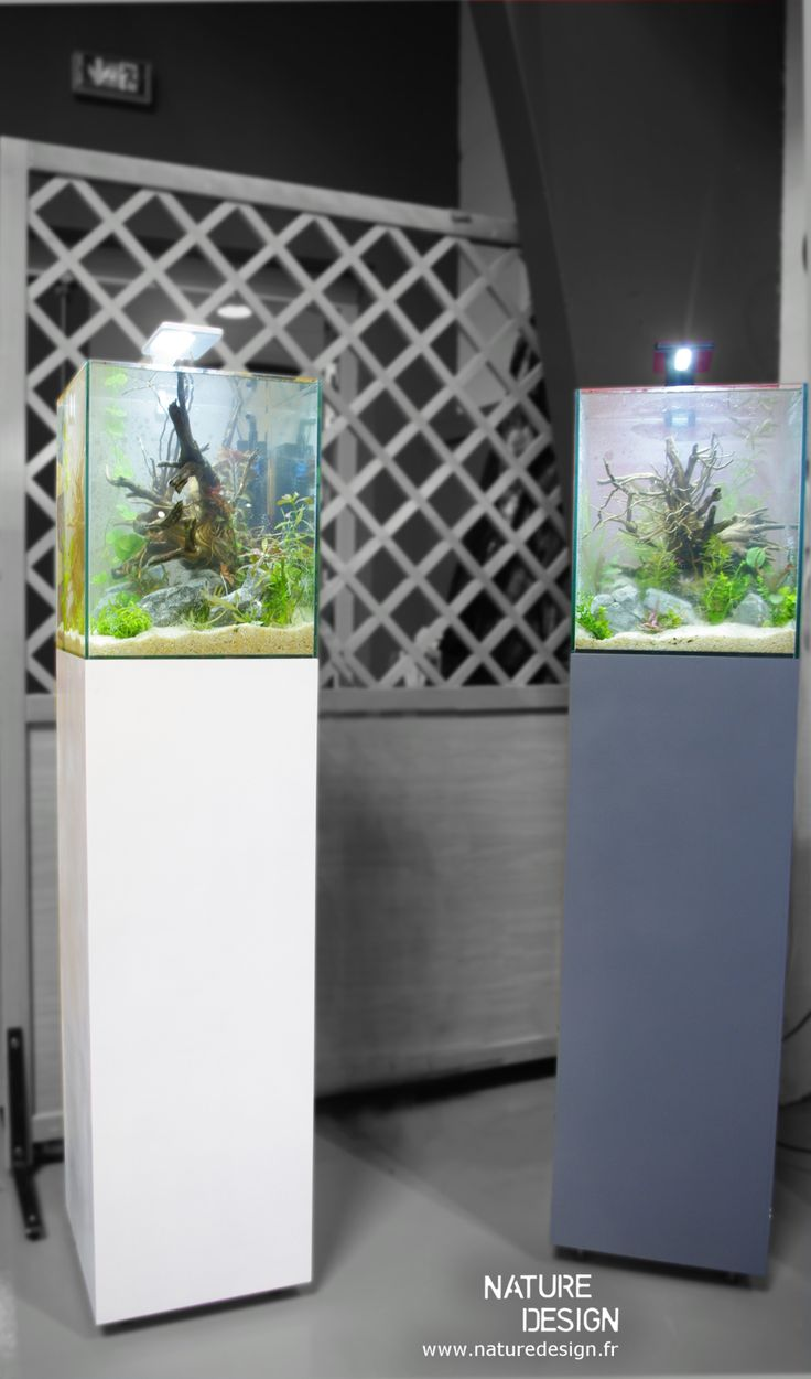les 25 meilleures id es de la cat gorie aquarium colonne sur pinterest aquariums paludarium. Black Bedroom Furniture Sets. Home Design Ideas
