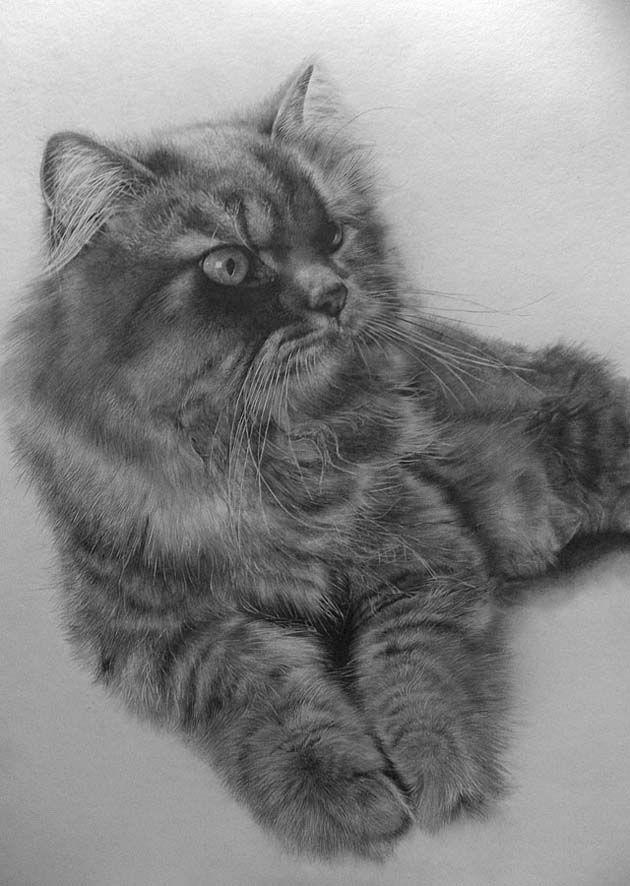 Los increíbles dibujos hiperrealistas de gatos hechos a lápiz por Paul Lung   FURIAMAG   Visibilizamos - Inspiramos - Conectamos