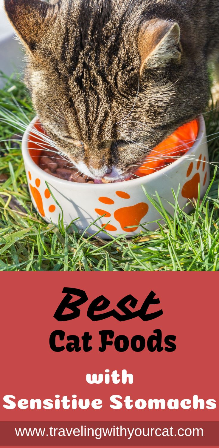 Best cat foods for cats with sensitive stomachs best cat