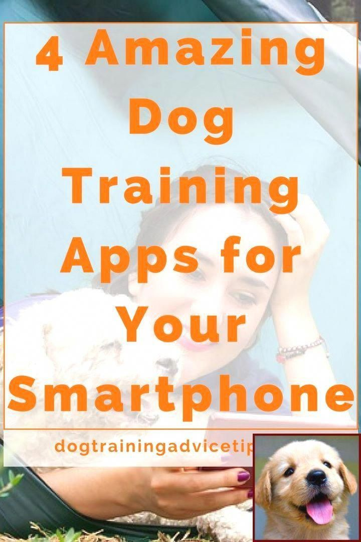 Attractive Best Dog Training Tricks Buy And Save Dog Training Best Dog Training Dog Training Classes