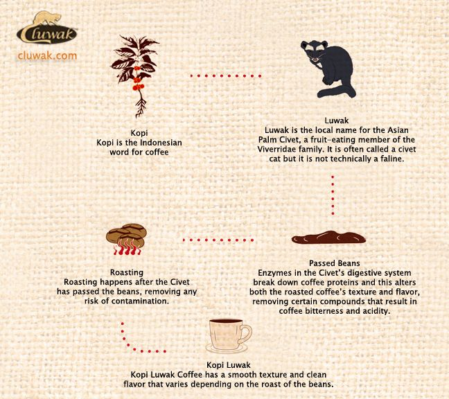 Kopi Luwak is a coffee. It is the world's most expensive and rare coffee ever existed.