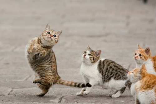 I like to singa, about the moona and the juna and the springaFunny Cat, Kitty Kitty, Crazy Cat, Funny Stuff, Of The, Cat Conga, Funny Animal, Dance Cat, Cat Lady