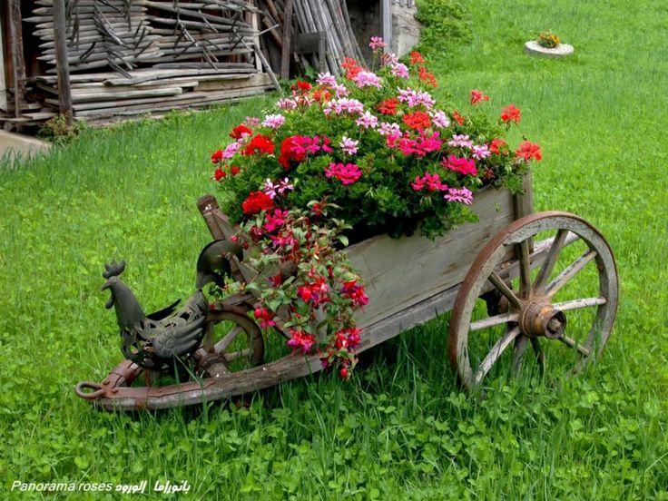 old wheelbarrow. love the chicken idea.