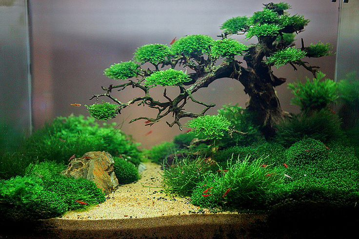 Love this aquascape Aquariums Pinterest