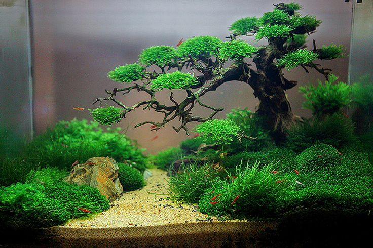 Love this aquascape