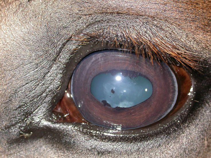 Lyme Disease In Horses Essential Oils For Tick Repellent