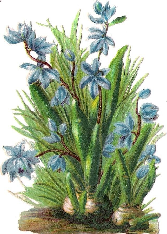 Oblaten Glanzbild scrap die cut chromo Blume 11,5 cm Frühling spring flower