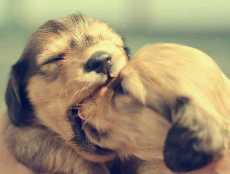 Pieski,szczeniaki,maluchy