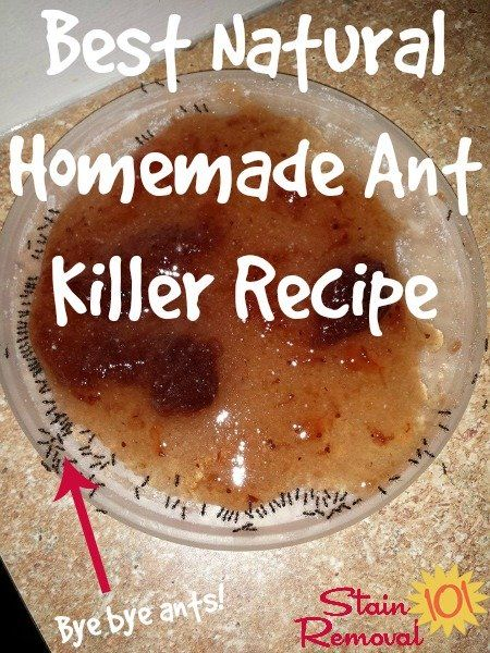 best natural homemade ant killer recipe - Here's the ingredients necessary for this DIY remedy:      2 tablespoons borax (active ingredient)     2 tablespoons jelly, jam or honey     1 teaspoon sugar     Container to hold the paste these other ingredients make  The amounts in this recipe don't need to be exact, just eyeball it. KEEP AWAY FROM CHILDREN AND PETS