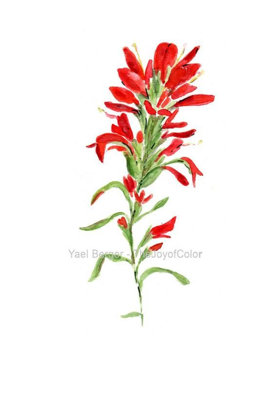 Indian Paintbrush Watercolor Print Indian Paintbrush Art Etsy