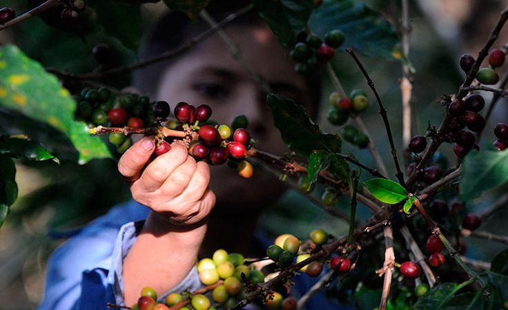 Medio punto cae envío de remesas en Honduras