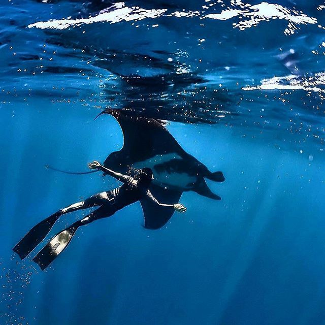 #Repost from @hanliprinsloo -  Birds of the sea... Can I swim with you... Fly with you... Dance with you and dream of you... Again!  #petermarshallphotography #freediving #spierre #mantaray