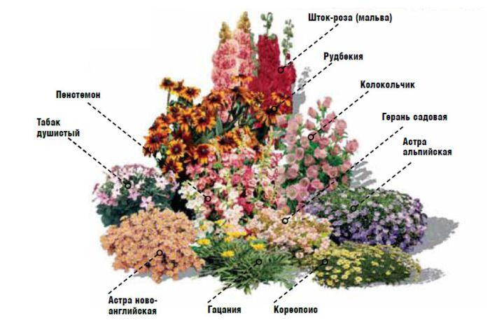 клумба непрерывного цветения из многолетников схемы: 14 тыс изображений найдено…