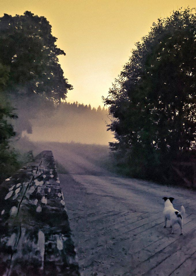 Lovely light in Porvoo countryside. Our little jackrussel terrier is amazed :D