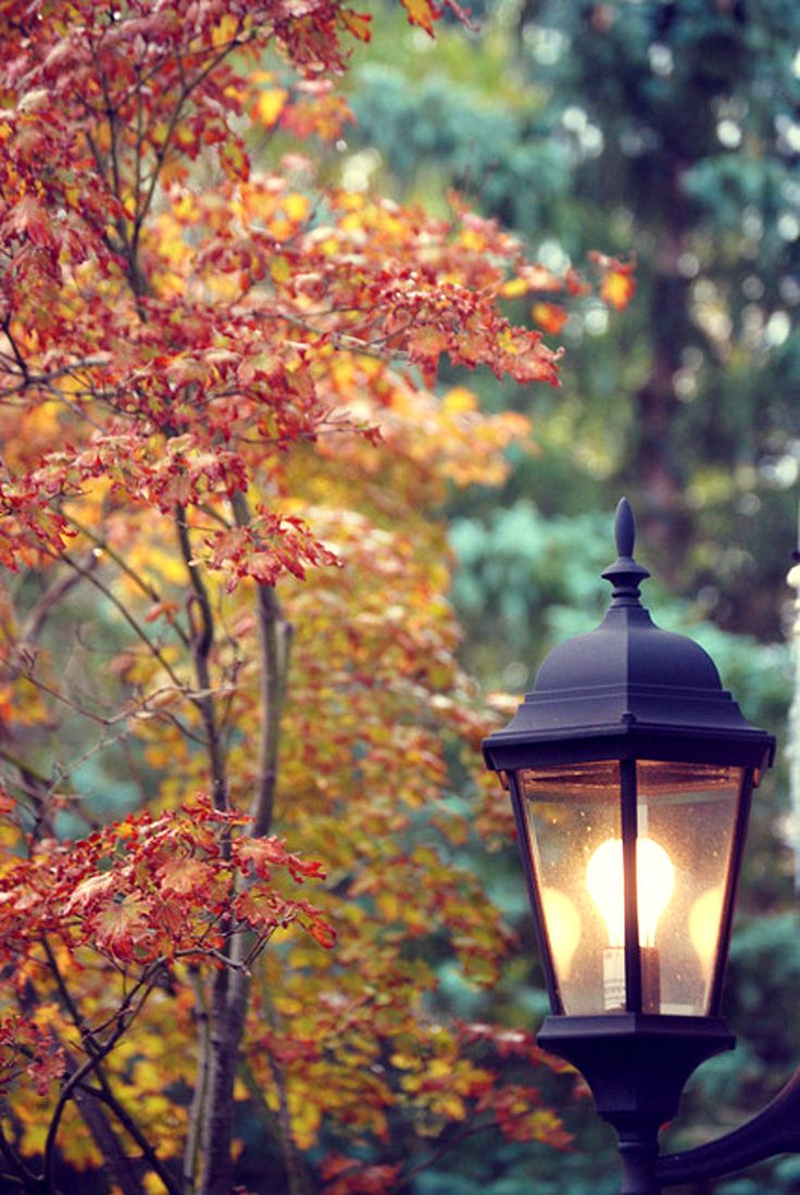 autumn was both exciting and comforting at our corner in Baltimore at 39th St…