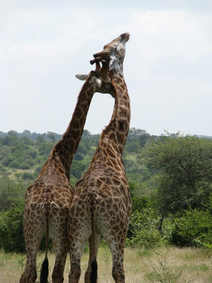South Africa - on my bucket list...