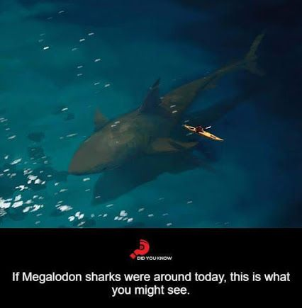 I hope that would be all I saw... | If Megalodon sharks were around today.
