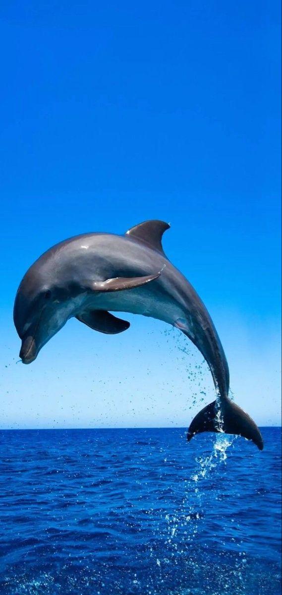 Pin Von Phone Wallpapers Auf Varied Delfine Bilder Wassertiere Meerestiere
