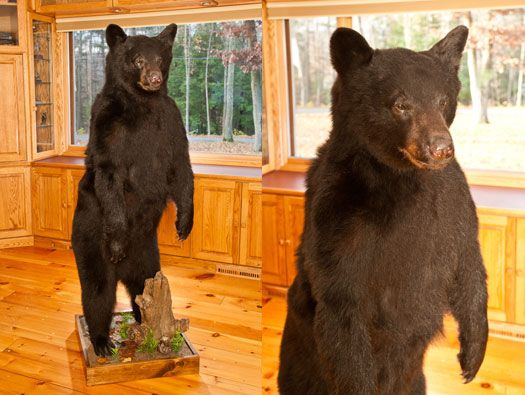 Black And Brown Bear Head Mounts For Sale Bills Bear