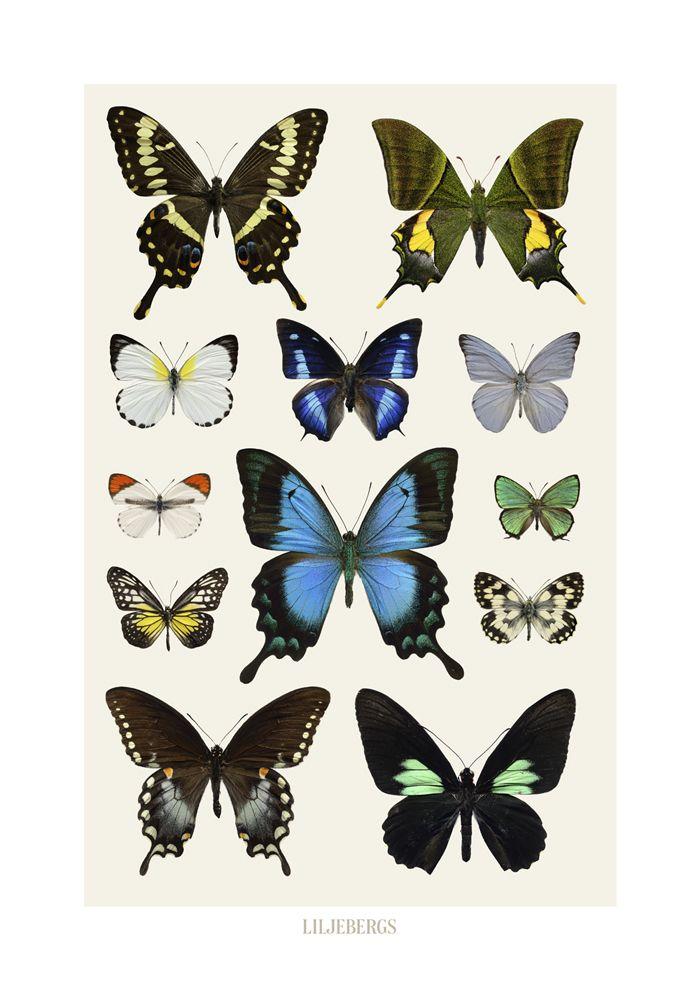 Affischer Liljebergs : Liljebergs. Tropiska blå