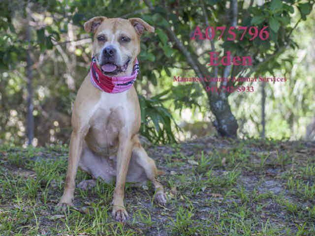 Eden Animal Rescue Dogs