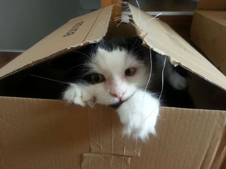 Some lost cats are simply hiding from you