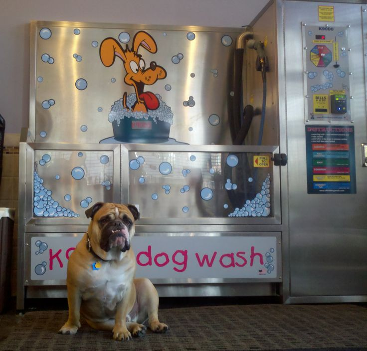 Dog Daycare And Grooming In Bath Maine Dog