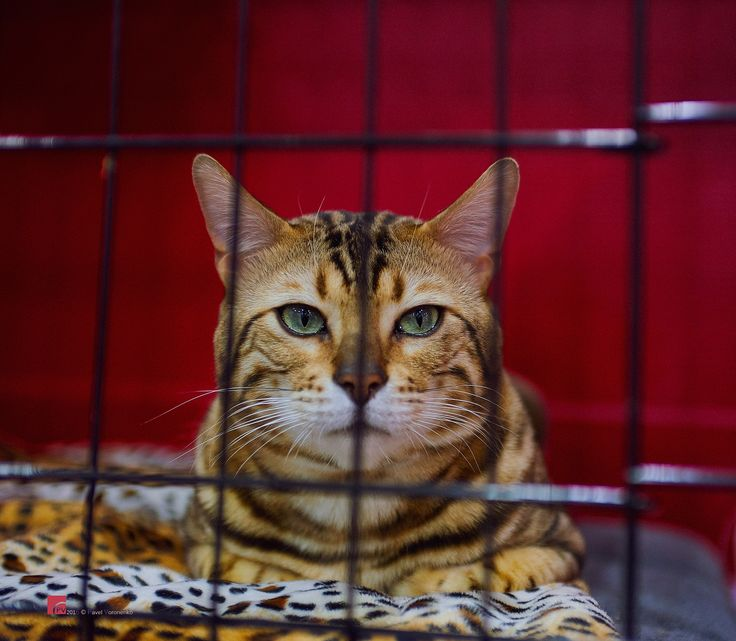 """Behind Bars - 2016 Spring Canadian Pet Expo Feel free to visit and follow me on  * <a href=""""http://torontointeriors.photography/"""">torontointeriors.photography</a> * <a href=""""https://www.facebook.com/PavelVoronenkoPhotography"""">Facebook</a> * <a href=""""https://www.facebook.com/torontointeriorsphotography"""">T.I.F. on Facebook</a> * <a href=""""https://instagram.com/torontointeriors.photography/"""">Instagram</a> * <a href=""""https://www.pinterest.com/PavelVoronenko/"""">Pinterest</a>"""