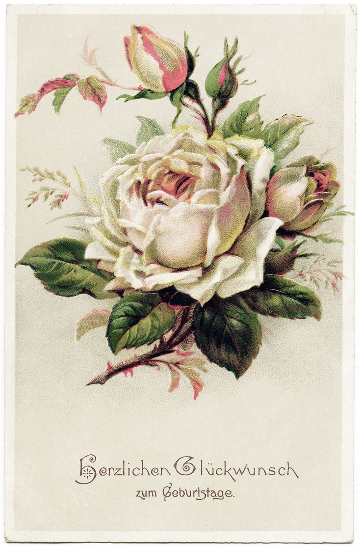 OldDesignShop - Vintage Rose from a German Post Card