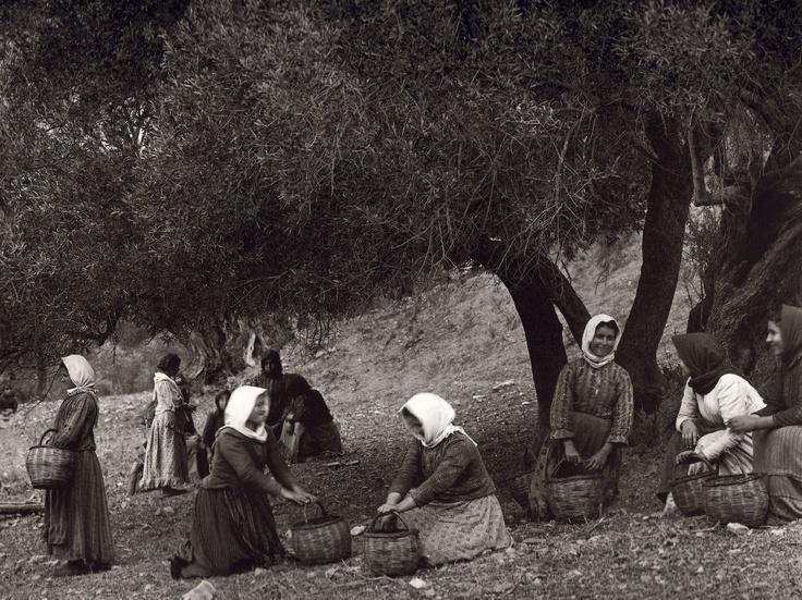 Πρέβελη 1911 Μάζεμα Ελιάς - Preveli 1911 Collecting Olives  Η ΚΡΗΤΗ ΜΟΥ: Παλιές φωτογραφίες της Κρήτης